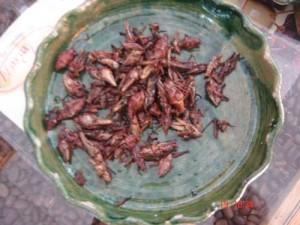grasshoppersmexicoxjb500