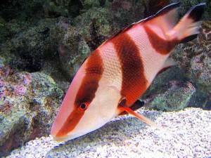 michael_lynch_aquarium