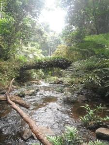 Guinea Africa nature